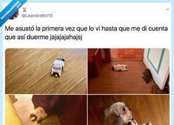 Enlace a El desmayo más cuqui que he visto en mi vida, por @LeandroNV10