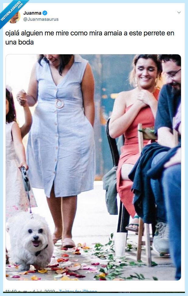 amaia,boda,mirar,ojal-a,perro