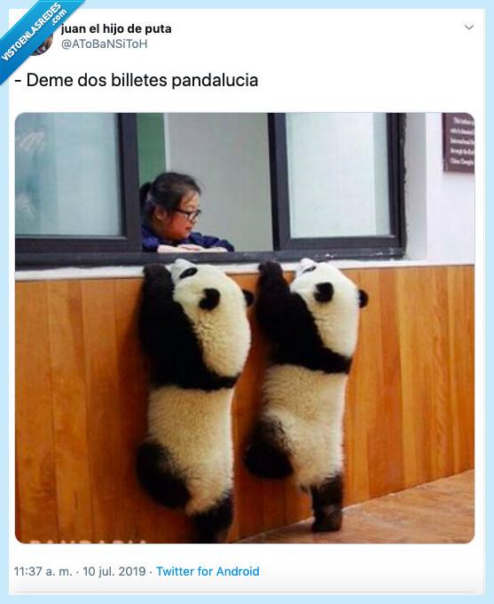 andalucía,billetes,panda,querer