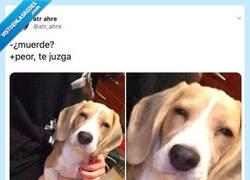 Enlace a No hay nada peor que un perro te juzgue, por @atr_ahre