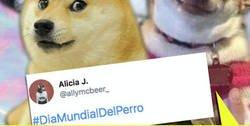 Enlace a En el Día Internacional del perro @allymcbeer_ se acuerda de los más grandes, los perro-memes de internet