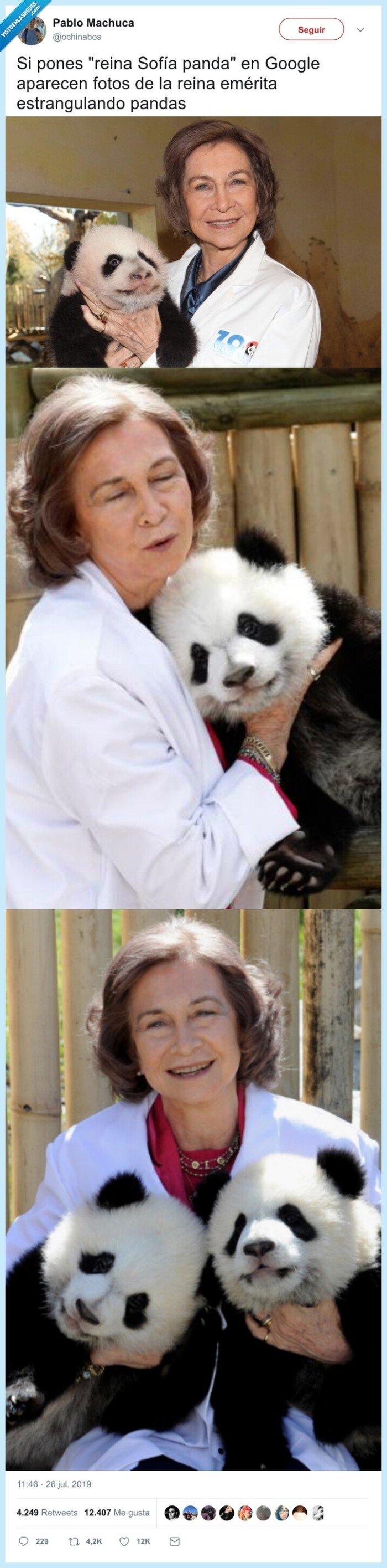 estrangular,pandas,reina sofia
