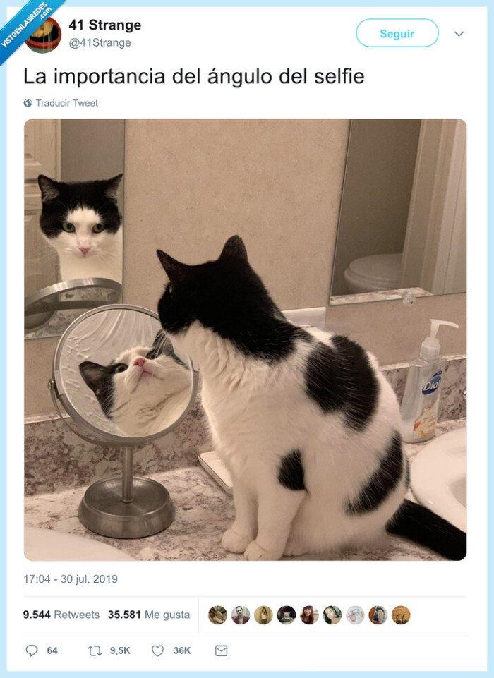 ángulo,gato,selfie
