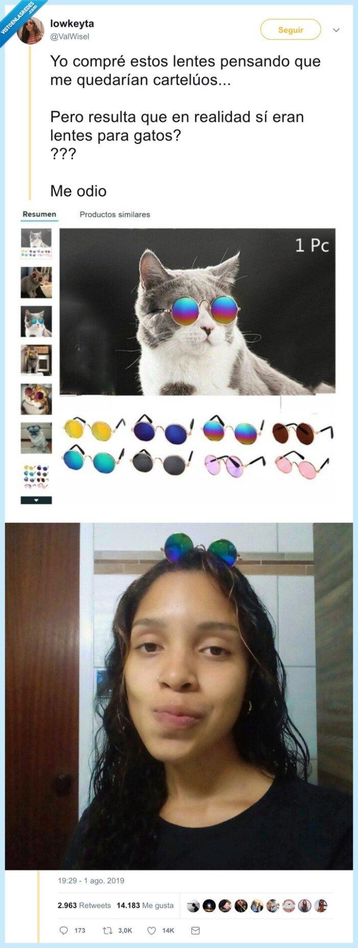fail,gafas,gatos