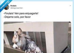 Enlace a Firulais no tiene dignidad ya, por @dogsreaction