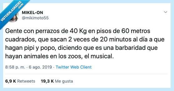 animales,musical,perro,zoo