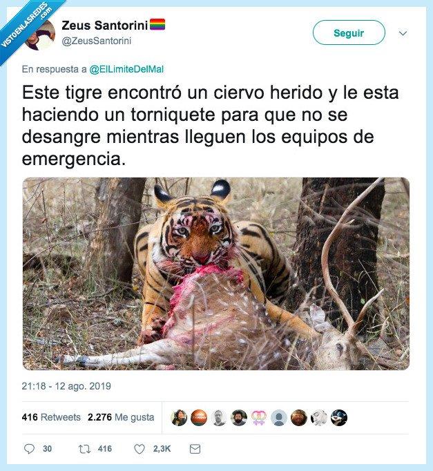 ayudar,ciervo,tigre,torniquete
