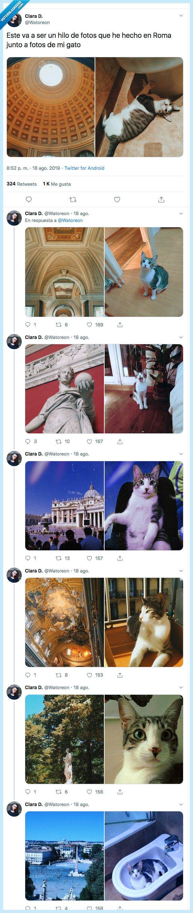 foto,gato,hilo,roma