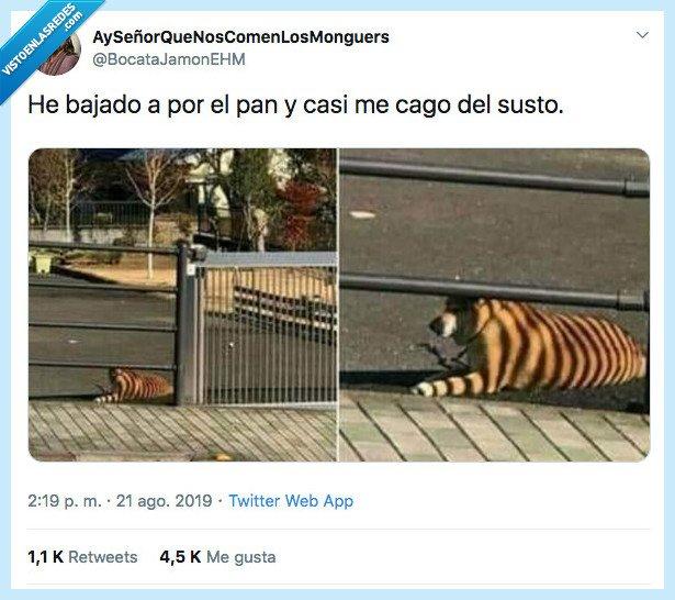 correr,perro,sombra,tigre