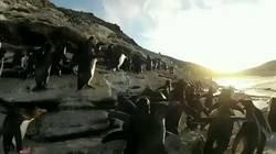 Enlace a El pingüino me representa, por @SoyBordeVale