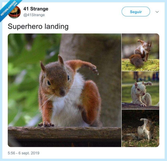 ardilla,aterrizar,superhéroe