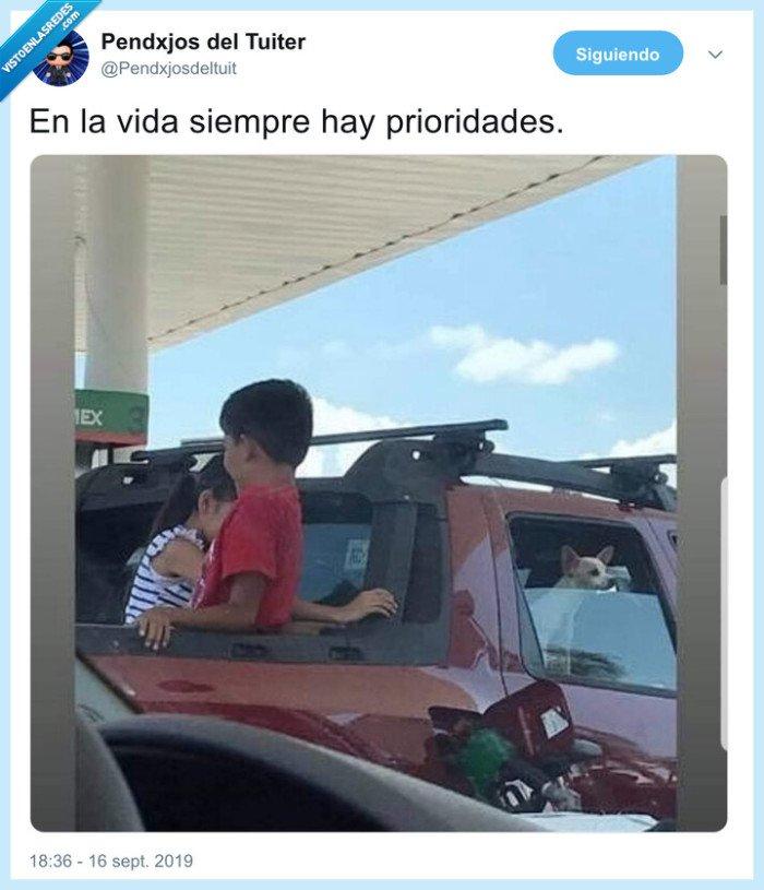 coche,hijos,perros