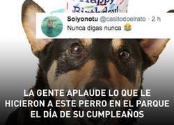 Enlace a La gente aplaude lo que le hicieron a este perro en el parque el día de su cumpleaños, por @casitodoelrato