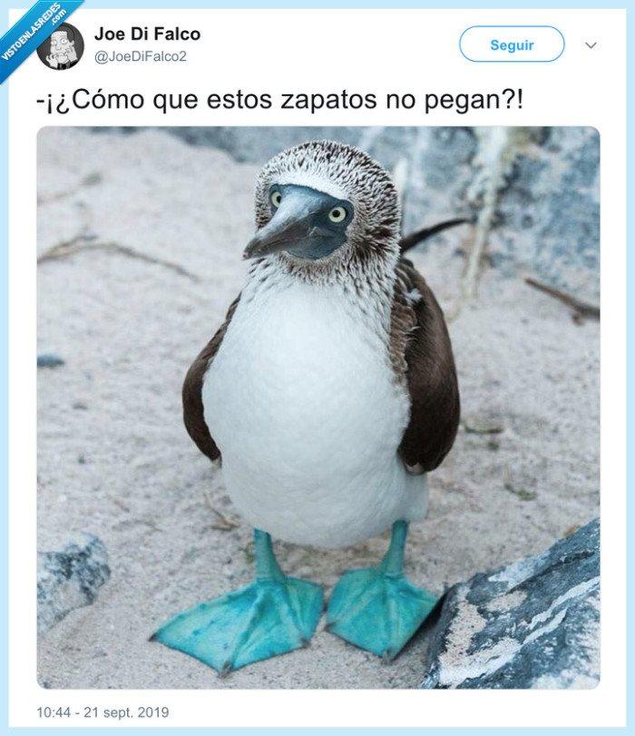 pinguino,zapatos