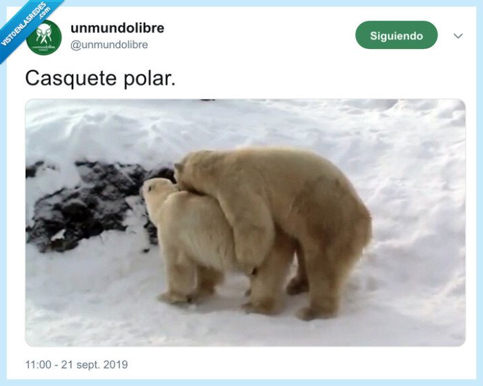 casquete,osos,polar