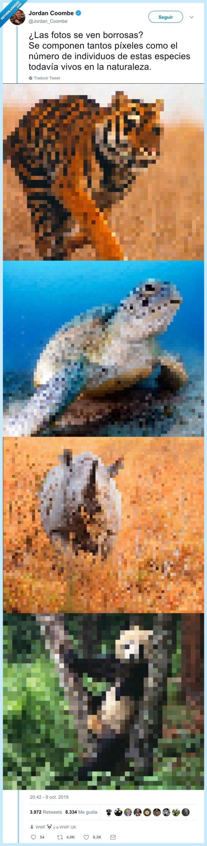 animales,extinción,pixeles