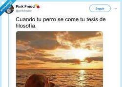 Enlace a Se le ve afectado, por @pinkfreudz