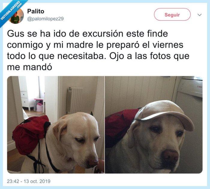 excursión,gorra,perro