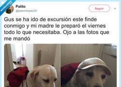 Enlace a Cuando tus padres cuidan más a tu perro que a ti, por @palomilopez29