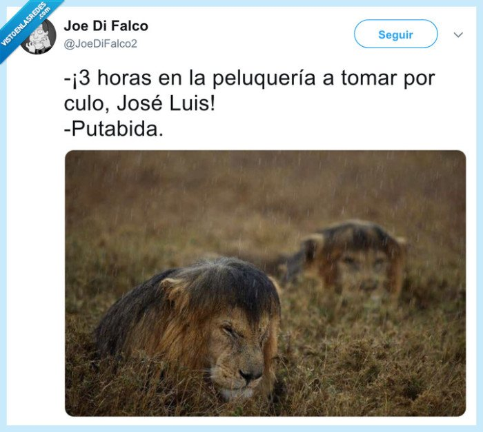 león,melena,peluquería