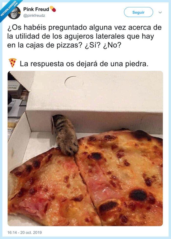 gato,patita,pizza