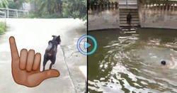 Enlace a Su dueño fingió ahogarse para ver si su perro lo salvaría y... BOOM