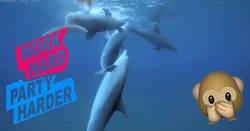 Enlace a Los delfines se drogan mordisqueando un pez globo, altamente tóxico y se lo van pasando mientras muestran euforia y trance