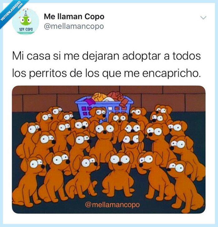 adoptar,Animales,casa,perros,yo