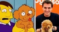 Enlace a Los Simpson ya advirtieron del derrumbe de Ciudadanos y Albert Rivera en las elecciones
