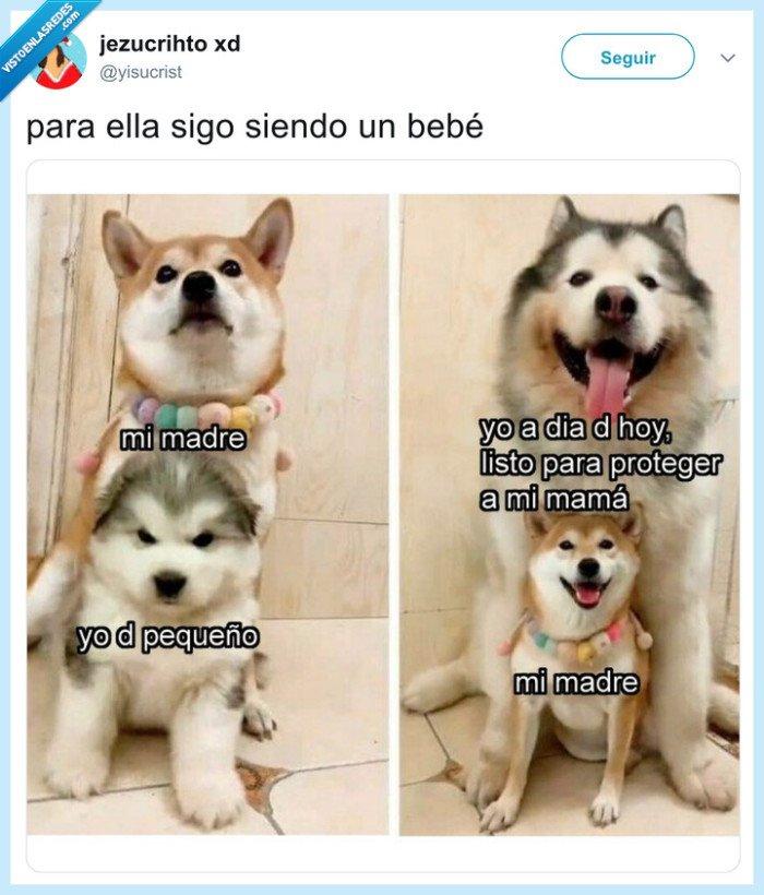 defender,madre,perro