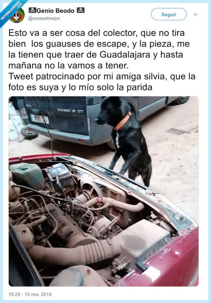 capó,coche,garaje,perro