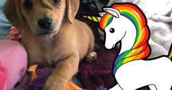 Enlace a Las redes sociales se vuelven locas con este perro unicornio: un perro que ha nacido con una cola en la cabeza