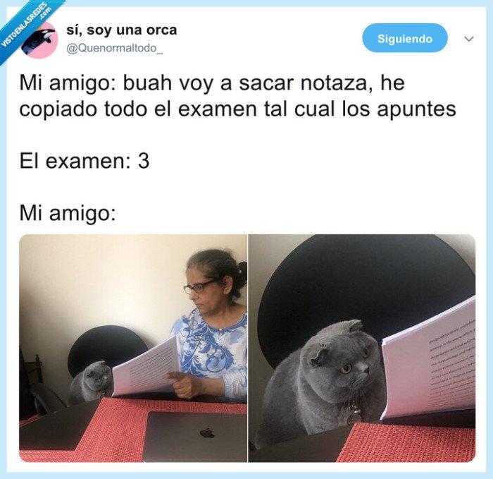 examen,gato,sorpresa