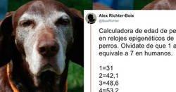 Enlace a La ciencia por fin descifra cómo calcular la edad de tu perro en años humanos