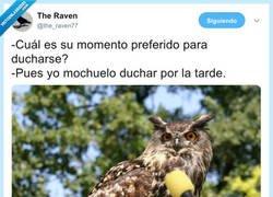 Enlace a Vuelven las entrevistas a animales, por @the_raven77