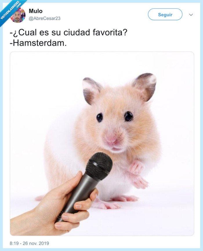amsterdam,animales,entrevistas,hamster