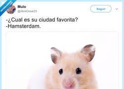 Enlace a Gustos de hamsters, por @AbreCesar23