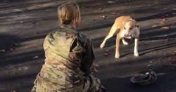 Enlace a Se fue hace 2 años con el ejército, y su perro al principio no la reconoce, mira su reacción después