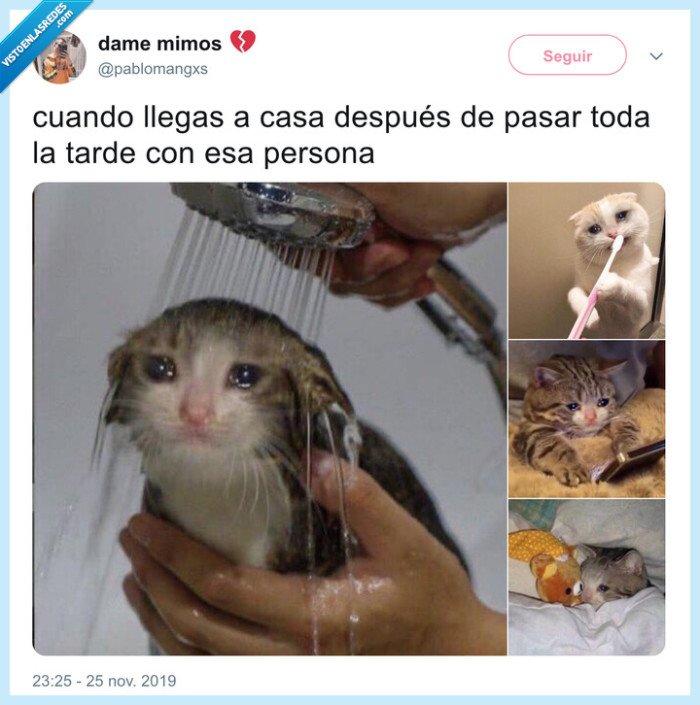 amor,desolado,gato,nostalgia