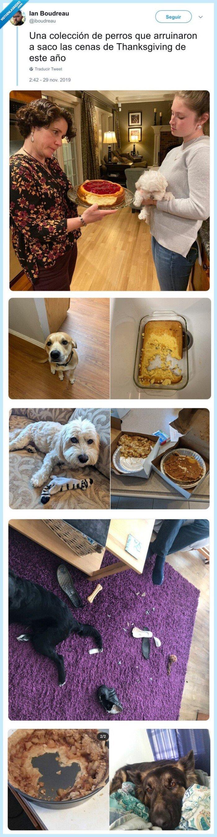 acción de gracias,arruinar,comer,comida,perros,thanksgiving