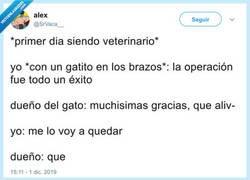 Enlace a Una loca de los gatos nunca puede ser veterinaria, por @SrVaca__