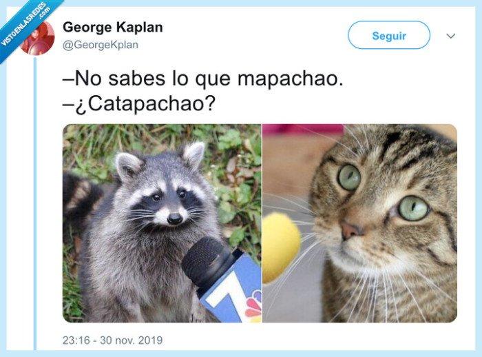 532993 - Mapachionan estos chistes de animales, por @GeorgeKplan