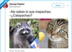 Enlace a Mapachionan estos chistes de animales, por @GeorgeKplan