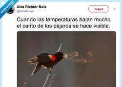 Enlace a Cuando las temperaturas bajan mucho el canto de los pájaros se hace visible, por @BoixRichter