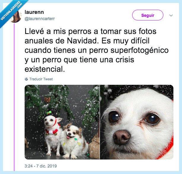 crisis existencial,fotos,navidad,perros