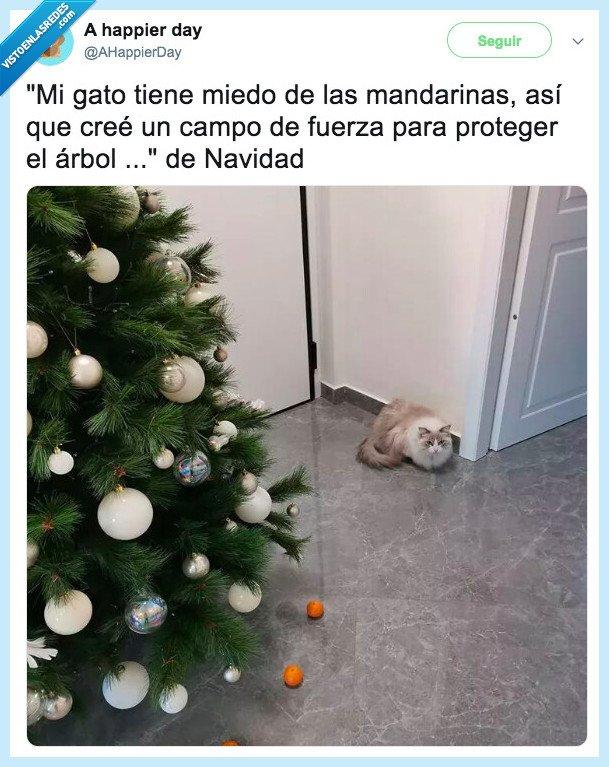 árbol de navidad,gato,mandarinas