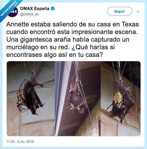 araña,batman,murciélago,omg,spiderman