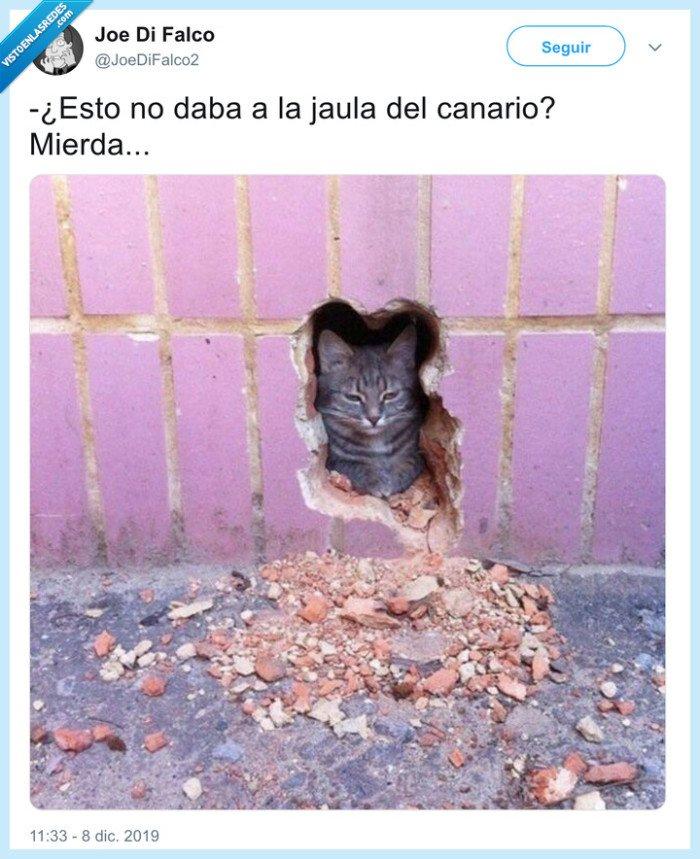 gato,pared,romper