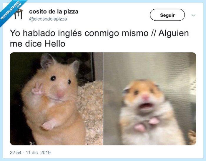 hamster,inglés,nivel