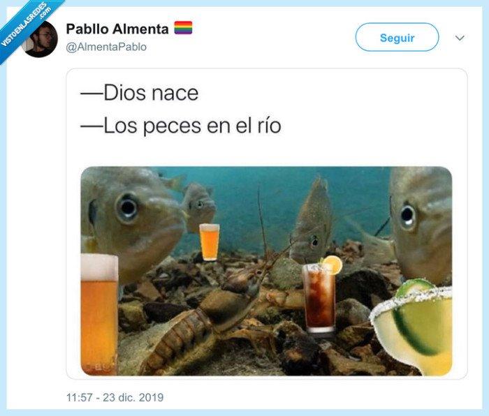 beben,cubatas,peces,peces en el río,río,villancico